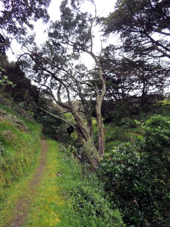 Sentier bucolique