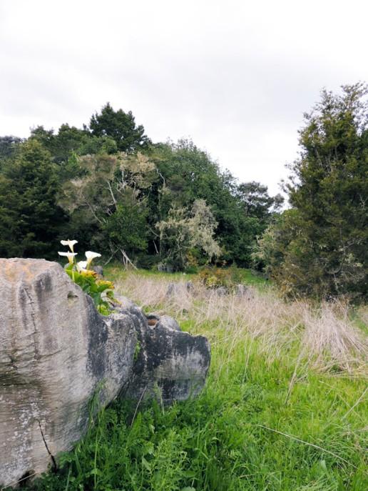 rocher fleur
