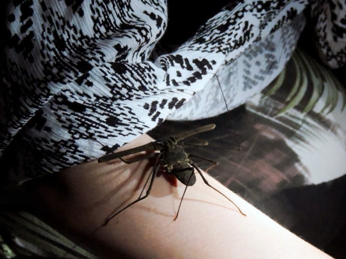 spider scorpion