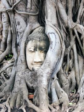 tete bouddha